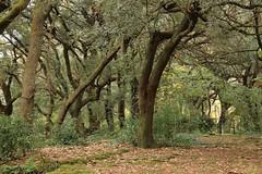 Les Estunes (Jorge Franganillo) Tags: autumn españa fall forest spain solitude loneliness noone nobody girona bosque otoño lonely catalunya soledad solitario cataluña gerona bosc tardor nadie banyoles solitud solitari soledat pladelestany ningú