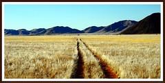 long ways (tor-falke) Tags: africa nature landscape african ngc natur safari land afrika paysage landschaft namibia afrique namib namibie africalandscape