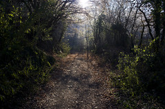 Entre du bois (Samuel Raison) Tags: light nikon lumire hiver beautifullight campagne fort nikond3 nikon2828mmafd nikon2880200mmafd