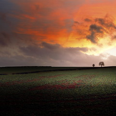 (Eric Goncalves) Tags: trees winter sunset sky cold color green nature clouds rural december gloucestershire fields treescape forestofdean canon7d tamronspaf1024mm ericgoncalves