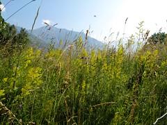 Orsieres - Martigny (12.07.13) 70 (rouilleralain) Tags: valais sembrancher valdentremont stbernardexpress orsires viafrancigena