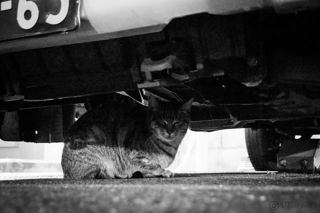 Today's Cat@2014-01-08