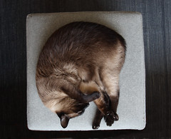 chill (**) Tags: cat kat chat gato katze mace  macska gatto  kot gat kedi kass  katt kato kissa kttur maka kucing pusa mo paka    katu kat  miv pusi kais    pisic    ngeru  piik qattus    onran