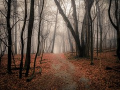 Foreboding (Thomas James Caldwell) Tags: old trees winter mist leaves fog forest woods focus soft day mt pennsylvania joy eerie spooky mount pa trail filter valley softfocus dreamy forge polar atmospheric lightroom 2014 pwfall