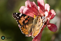 One day One life (Massios Photography) Tags: life flower nature colors butterfly photography wings insects massios