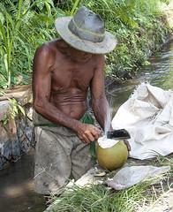 How to open a coconut (Fil.ippo (AWAY)) Tags: street travel people bali work indonesia nikon open coconut oldman human job filippo d5000 filippobianchi