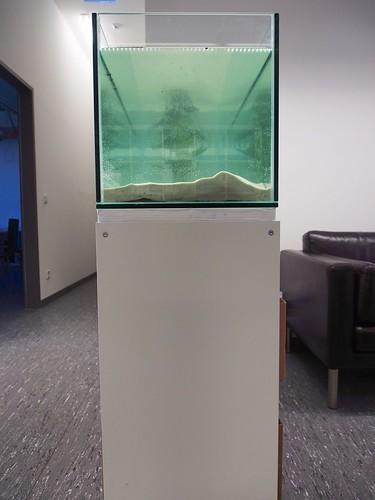 FS1 - New Storage Room & Aquarium 3/2014