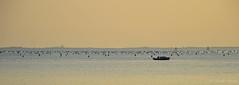 _DSC0020 (nicolapesenti) Tags: sea italy orange beautiful boat nikon flickr barca italia mare follow trieste followme duino d3200 nikonitalia vision:sunset=0795 vision:sky=0795