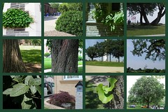 In all things of nature there is something of the marvelous.   -Aristotle (Esani (Nibedita)) Tags: usa plant tree green nature sunshine collage ilovenature quote aristotle 2012 84 2014 hba beautifulnature ilovegreen greennature picturecollage nibedita 84365 esani 250314