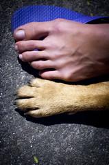 PArceiro (Ricardo_Jose) Tags: luz paran nikon arte jose curitiba cachorro carro ricardo pr litoral cavalo pescaria morretes d90 matinhos parangu rickig8