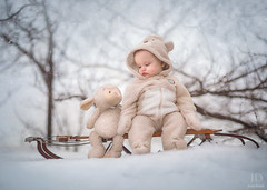 Let's Do This! ({jessica drossin}) Tags: jessicadrossin portrait baby lamb sled stuffed animal winter sleigh fuzzy cold childhood wwwjessicadrossincom