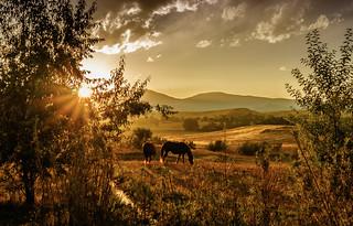 horses in autumn