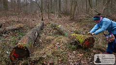 Manuela fotografiert Pilze auf dem Baumstamm