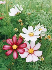 #flower (Mg Lin) Tags: flower