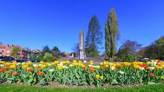8mm Tulips (Ⓨ a s m i n e Ⓗ e n s +4 900 000 thx❀) Tags: canon canoneos750d neewerpro 8mm belgium belgique bruxelles brussels flowers tulipes tulips blue town city flora 7dwf hensyasmine