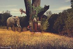 El Jardin Secreto - A secret garden (Marco San Martin) Tags: sectret secreto jardin garden marcosanmartin mywork artwork fineart composition beautiful children elephant cat tree arbol sky magic magico lovely photoshop creative nature naturaleza giraffe happy world mundo arte art myart