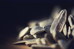 Seeds. (Dikke Biggie.) Tags: macromondays macromonday macro closeup detail themeseeds seeds seed seeding zaadjes zaad zaaien sunflowerseeds sunflowerseed zonnebloemzaadjes zonnebloemzaad canon canoneos450d 100mm f28 dof depthoffield scherptediepte bokeh light licht explored
