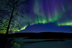 042017 - A bare Cottonwood on the South bank of the Salcha (Nathan A) Tags: alaska ak fairbanks salcha northstar river spring cold ice snow night aurora auroraborealis northernlights nightsky stars farnorth geomagnetic green nature outdoors beauty skygazing