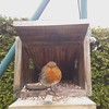 01-20170319_093226-00 (www.cabane-oiseaux.org) Tags: 2017031909h012017031909322600jpg 20170319 09h