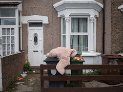 London Bear Rummage (Magic Pea) Tags: london urban street photo photography magicpea bear softtoy forestgate eastlondon rummaging bins rubbish funny quirky house home terraced houses uk