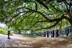 20170423_14183701_HDR.jpg (Les_Stockton) Tags: frenchquarter hdrefex highdynamicrange neworleans hdr tree vacation louisiana unitedstates us