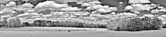 Palomino Panorama  IR (Neal3K) Tags: landscape panorama pasture field horses ir infraredcamera kolarivisionmodifiedcamera georgia henrycountyga