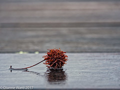 Forsaken (Tewmom) Tags: solitary alone bud closeup negativespace minimalism red