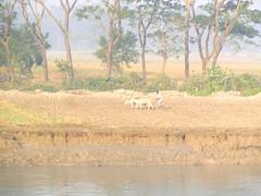 গ্রাম বাংলা (Bangladeshi Natural Beauty) (ferdoush007) Tags: bangladeshi natural beauty bd beautiful scene wow nice bangla বাংলাদেশ বাংলাদেশের প্রাকৃতিক সৌন্দর্য বাংলার রূপ গ্রাম গ্রাম্য countryside country side village নদী গরু চাষি চাষ ক্ষেত লাঙ্গল