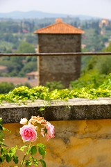 IMG_4359 (David Danzig) Tags: italy 2016 july boboli gardens florence