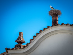 Storch in Silves (olipennell) Tags: haus portugal silves storch tier vogel faro pt animal bird stork house roof nature