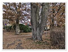 Autumn dreams (Börje Tröttne) Tags: karlstad
