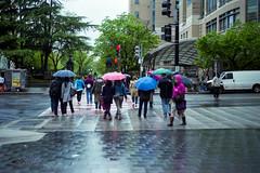 img823 (markczerner) Tags: washington dc washingtondc street streetphotography rain rainyday rainy nikon nikonfa filmphotography fuji fujifilm pro400h 400h filmisnotdead umbrella wet metro district