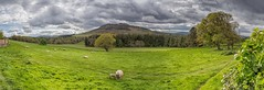 ... panorama with sheep ... (jane64pics) Tags: 26techniques challenge8 panorama wicklow cowicklow countryside killruddery littlesugarloaf sheep lambs spring springtime trees treeline panoramawithsheep janefriel janefriel2017 greystonescameraclub gcc clouds cloudy wideangle fields mountain wicklowmountains