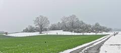 Wintry scenery (Claude@Munich) Tags: germany bavaria upperbavaria straslachdingharting grosdingharting tree trees winterscenery snow revival claudemunich deutschland bayern oberbayern baum bäume schnee winterlandschaft wintereinbruch rückkehr