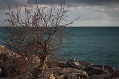 Simple beauty (akisibiza13) Tags: sea bluesea hellios442 canon1200d canon 1200d greece greek landscape tree water sky cloud clouds