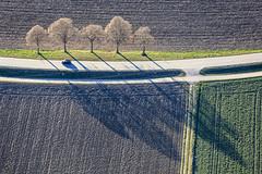 Group Of Five (Aerial Photography) Tags: by la ndb 27032017 5sr25266 abendstimmung auto baum baumreihe buchaerlbach bäume diagonale fotoklausleidorfwwwleidorfde landschaft landstrase laubbaum luftaufnahme luftbild niedererlbach pkw schatten st2082 stimmung strase aerial automobile car deciduoustree diagonal foliagetree landscape leaftree lineoftrees mood outdoor road rowoftrees shadow tree trees buchamerlbachlkrlandshut bayernbavaria deutschlandgermany deu