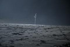 METAL (HRMDINOSAURIO) Tags: postes posts niebla brouillard fog blancoynegro blackandwhite