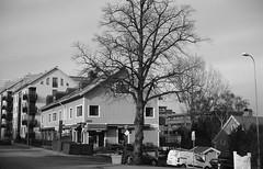 Johanneberg (rotabaga) Tags: sverige sweden svartvitt göteborg gothenburg blackandwhite bw bwfp diy caffenol