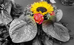 Dedicata a Elisabetta (collage42 -Pia-Vittoria//) Tags: fiori flowers flores desaturazioneparziale