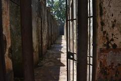 Bagne des îles (ptitmaxguyane) Tags: jaguar zoo bagne iles du salut capucin singe oiseau marais de kaw prison héron cocoï martin pecheur amerique sud buse hurubus hoazin huppé cabiaie