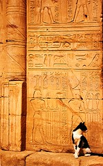 The Guardian of the Temple (micheledibitetto) Tags: temple egypt ruins cat hieroglyphics