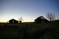 Worth the Wait (nedlugr) Tags: ca california carrizoplainnationalmonument carrizoplain silhouette silhouettes sunrise beforesunrise trees flowers wildflowers horizon usa sanluisobispocounty houses house oncewashome ruraldecay ruralwest rural
