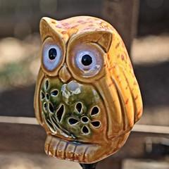 Yellow Owl (hbickel) Tags: owl bird ceramic photoaday pad yellow canont6i canon
