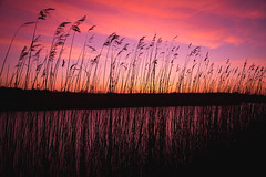 Sunrise Reeds (SimonTHGolfer) Tags: sunrise sunset suffolk snape reeds nature colours colors dawn silhouette silhouettes clouds river eastanglia uk england simontalbothurnphotography