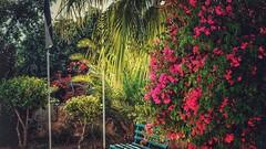 Courtyard (ibndzerir) Tags: spring ساحة مسجد معاذبنجبل sony landscape jordan court courtyard yard