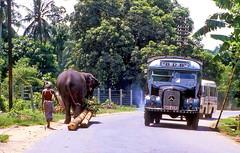 On the road to Kandy, Sri Lanka. (gerard eder) Tags: landscape landschaft paisajes natur nature naturaleza world travel reise viajes asia south southasia southernasia srilanka kandy road countryroad tropical traffic transport truck elefant
