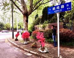 #Corner (INSTAGRAM - tania.prosdocimo) Tags: corner flickrfriday nanjing china selling trees pink street smoking footpath sidewalk outside shade road