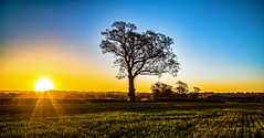 A tree (Peter Leigh50) Tags: sunrise leicestershire farmland rural uk april field blue sky bright shadows sunray