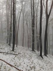 Nebel im Wald (shortscale) Tags: wald schnee baum nebel