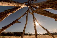Room with a view (OzzRod) Tags: pentax k1 smcpentaxda1017mmf3545fisheye fisheye defished driftwood teepee sunburst beach cuttagee singleinapril2017